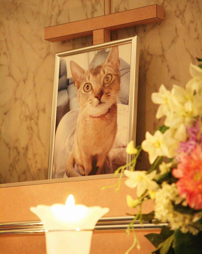 ペット葬儀のマナーについて