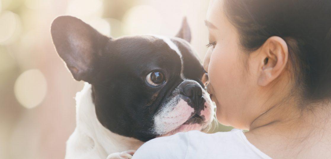 犬や猫のペット葬儀に参列すべき?お香典は必要?